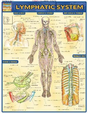 Book cover BarCharts QuickStudy Lymphatic System