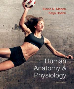 Book cover Human anatomy & physiology