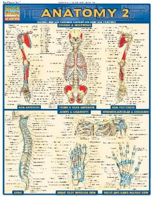 Book cover BarCharts QuickStudy Anatomy