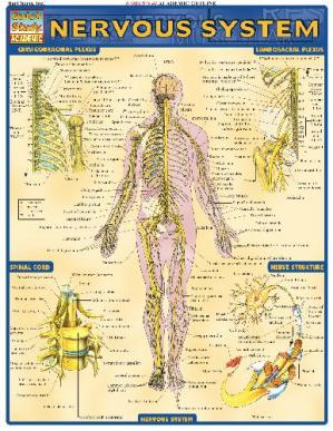 Book cover BarCharts QuickStudy Nervous System