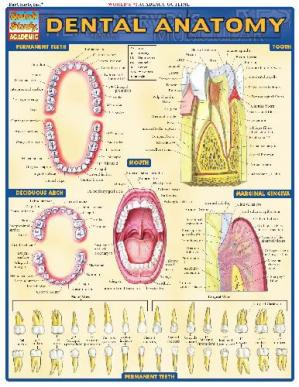 Book cover BarCharts QuickStudy Dental Anatomy