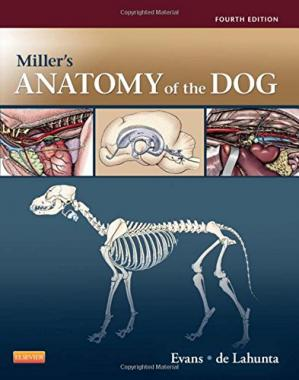 Book cover Miller's Anatomy of the Dog