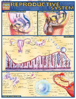 Book cover BarCharts QuickStudy Reproductive System