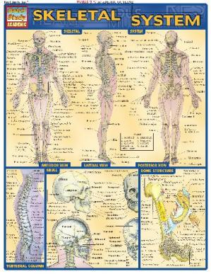 Book cover BarCharts QuickStudy Skeletal System